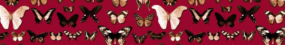 Lepidoptera Background