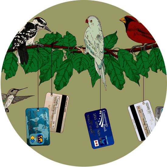 Birds and credit cards